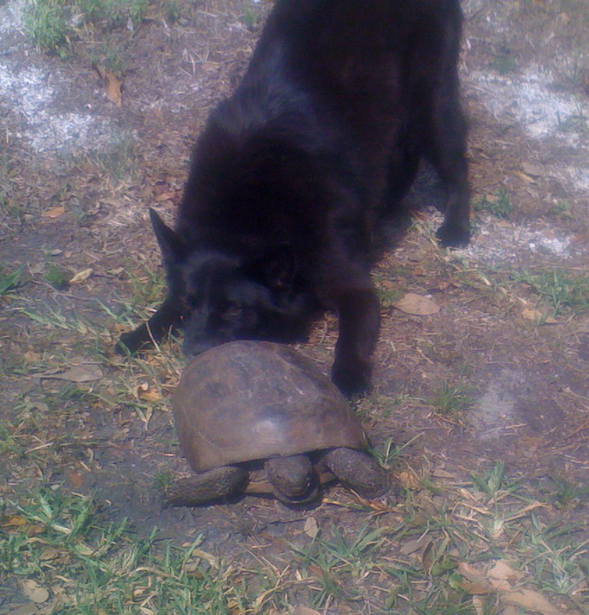 turtle-puppy love  (c) bob traupman 2009. all rights reserved.