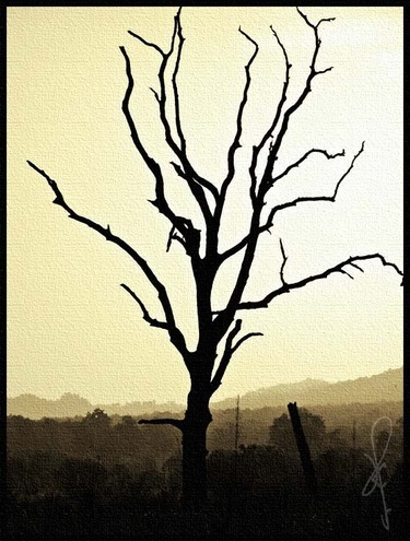 barren-fig-tree